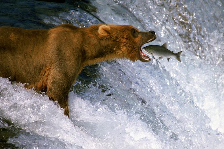 Wildlife Photography Fish
